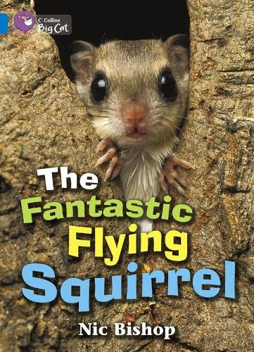 9780007471195: The Fantastic Flying Squirrel Workbook (Collins Big Cat)