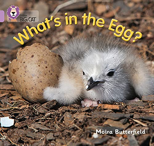 What's in the Egg? (Collins Big Cat): Butterfield, Moira