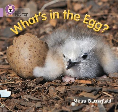 9780007512607: What's in the Egg? (Collins Big Cat)