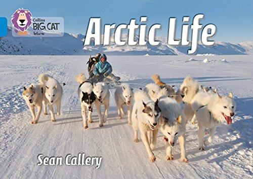 9780007512867: Collins Big Cat - Arctic Life: Band 04/Blue