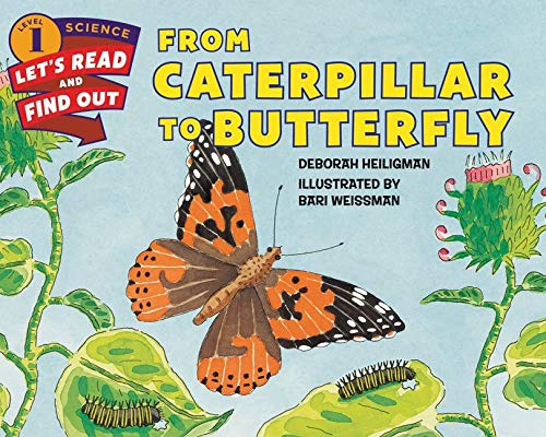 9780060242640: From Caterpillar to Butterfly (Lets-Read-and-Find-Out Science Stage 1)