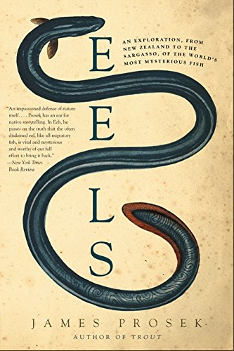 9780060566128: Eels: An Exploration, from New Zealand to the Sargasso, of the World's Most Mysterious Fish