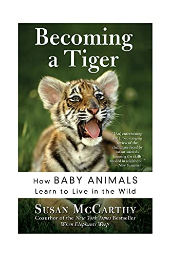 9780060934842: Becoming a Tiger: How Baby Animals Learn to Live in the Wild
