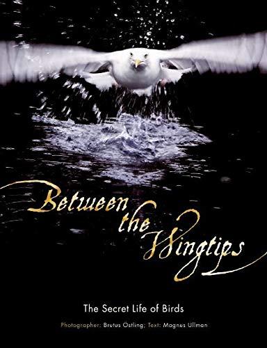 9780061136856: Between the Wingtips: The Secret Life of Birds