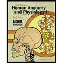 9780073391397: Study Guide for An Introduction to Human Anatomy and Physiology II