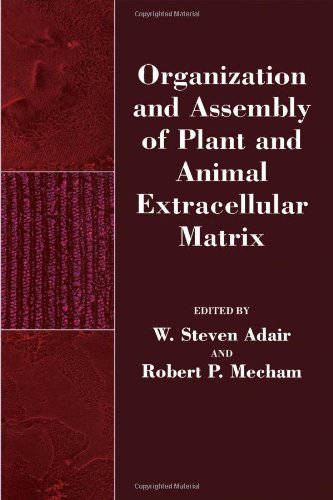 9780120440603: Organization and Assembly of Plant and Animal Extracellular Matrix (Biology of Extracellular Matrix)