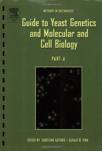 9780121827786: Guide to Yeast Genetics and Molecular Biology, Volume 194 (Methods in Enzymology)