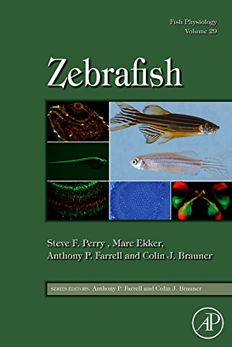 9780123749833: Fish Physiology: Zebrafish, Volume 29