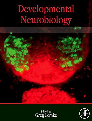9780123750815: Developmental Neurobiology