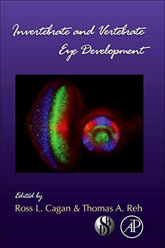 9780123850447: Invertebrate and Vertebrate Eye Development, Volume 93 (Current Topics in Developmental Biology)