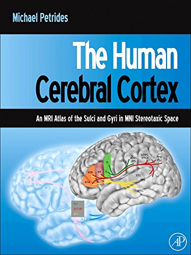 9780123869388: The Human Cerebral Cortex: An MRI Atlas of the Sulci and Gyri in MNI Stereotaxic Space