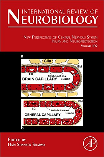 9780123869869: New Perspectives of Central Nervous System Injury and Neuroprotection, Volume 102 (International Review of Neurobiology)