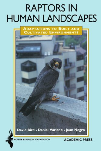 9780123884527: Raptors in Human Landscapes: Adaptations to Built and Cultivated Environments