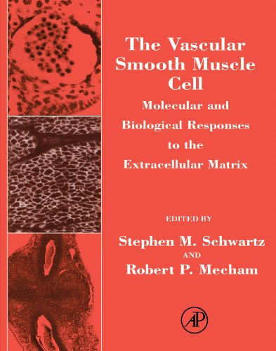 9780123907578: The Vascular Smooth Muscle Cell: Molecular and Biological Responses to the Extracellular Matrix