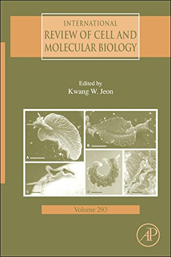 9780123943040: International Review of Cell and Molecular Biology, Volume 293