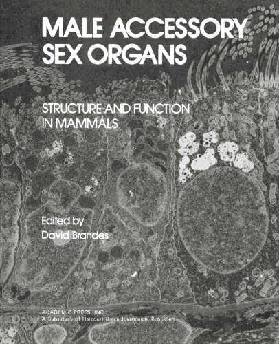 9780124143494: Male Accessory Sex Organs: Structure and Function in Mammals