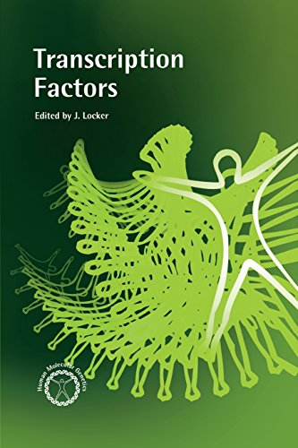 9780124543454: Transcription Factors (Human Molecular Genetics)