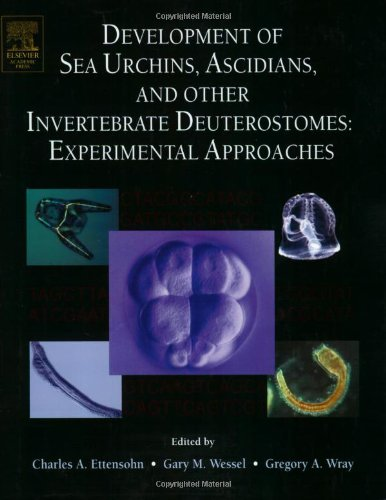 9780124802797: Development of Sea Urchins, Ascidians, and Other Invertebrate Deuterostomes: Experimental Approaches, Volume 74 (Methods in Cell Biology)