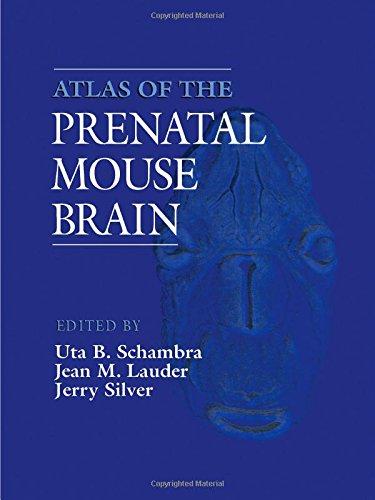 9780126225853: Atlas of the Prenatal Mouse Brain