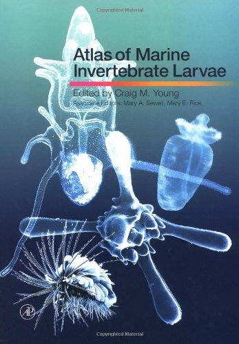 9780127731414: Atlas of Marine Invertebrate Larvae