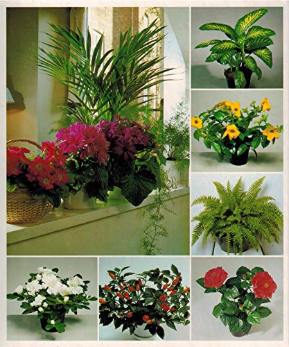 9780130040015: Success with House Plants - 3 Ring Binders including groups 1 - 19