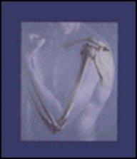 Human Anatomy: Frederic H. Martini,