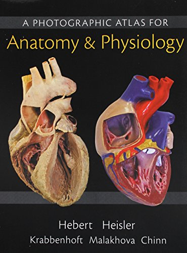 9780134478371 Practice Anatomy Lab 30 Lab Guide Modified