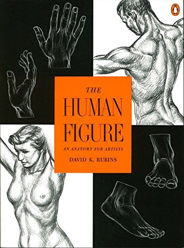 9780140042436: The Human Figure: An Anatomy for Artists