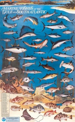9780160724367: Marine Fishes of the Gulf and South Atlantic