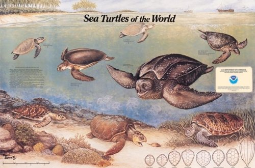 9780160724411: Sea Turtles of the World