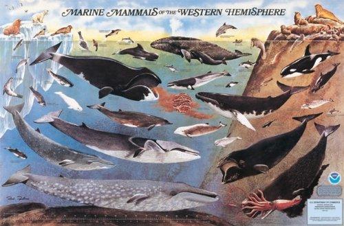 9780160724428: Marine Mammals of the Western Hemisphere