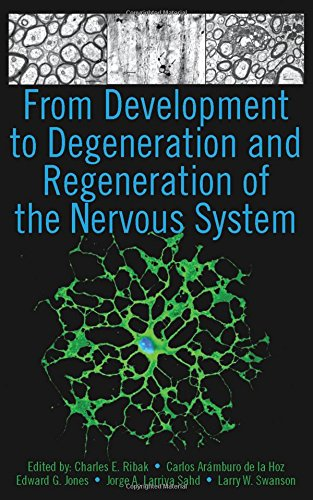 From Development to Degeneration and Regeneration of: Charles E. Ribak