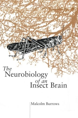 The Neurobiology of an Insect Brain: Malcolm Burrows