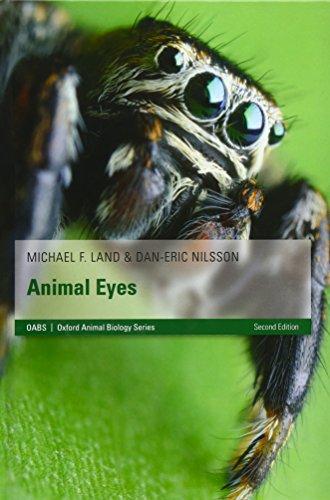 9780199581139: Animal Eyes