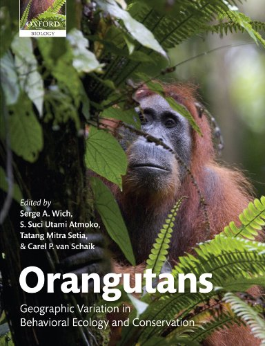 9780199584154: Orangutans: Geographic Variation in Behavioral Ecology and Conservation
