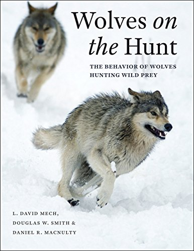9780226255149: Wolves on the Hunt: The Behavior of Wolves Hunting Wild Prey