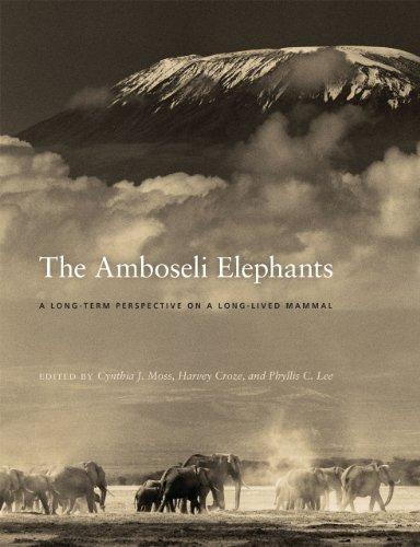 9780226542232: The Amboseli Elephants: A Long-Term Perspective on a Long-Lived Mammal
