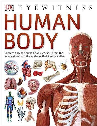 9780241013618: Human Body (Eyewitness)