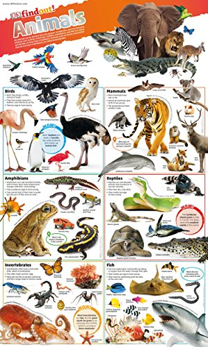 9780241295786: DKfindout! Animals Poster