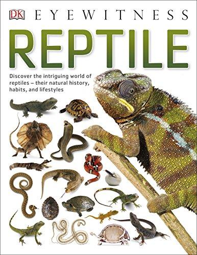 9780241297162: Reptile (DK Eyewitness)