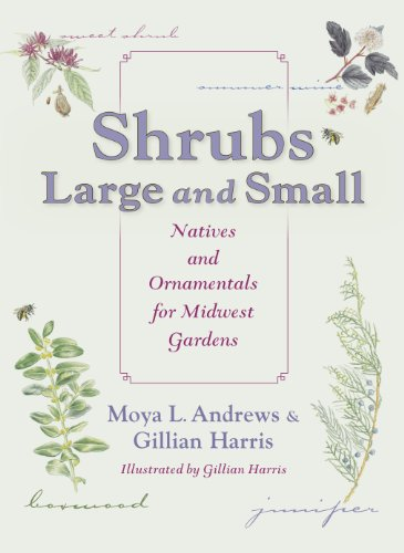9780253009067: Shrubs Large and Small: Natives and Ornamentals for Midwest Gardens