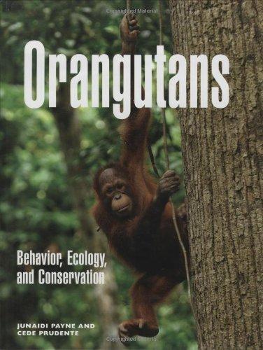 9780262162531: Orangutans: Behavior, Ecology, and Conservation (MIT Press)