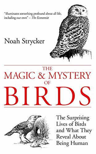 9780285642799: The Magic & Mystery of Birds: The Surprising Lives of Birds and What They Reveal About Being Human
