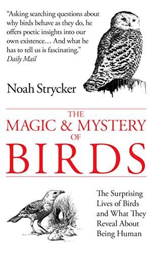 9780285643239: The Magic and Mystery of Birds: The Surprising Lives of Birds and What They Reveal About Being Human