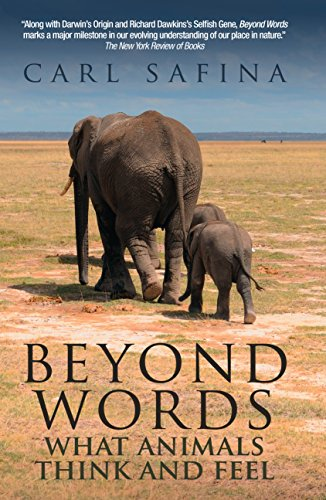 9780285643468: Beyond Words: What Animals Think and Feel