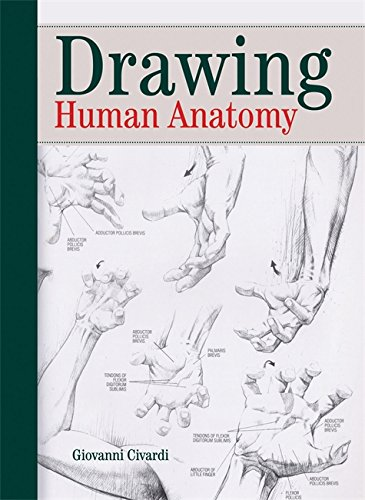 9780289800898: Drawing Human Anatomy