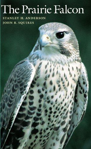 9780292704732: The Prairie Falcon (Corrie Herring Hooks Series)