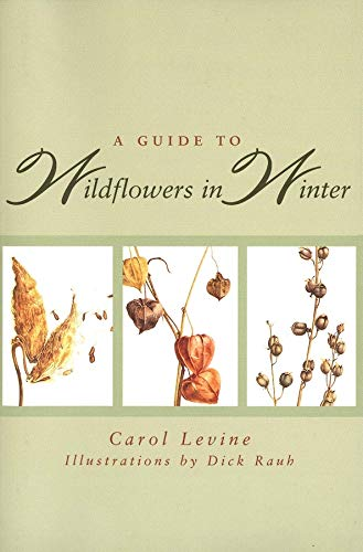9780300065602: A Guide to Wildflowers in Winter: Herbaceous Plants of Northeastern North America