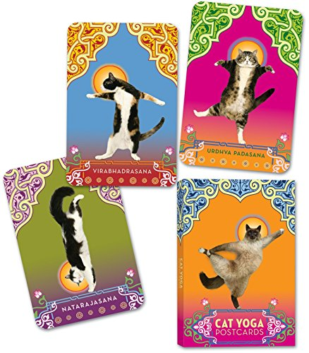 9780307395429: Cat Yoga Postcards