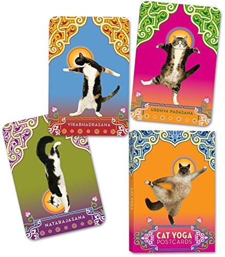 9780307395429: Cat Yoga Postcards